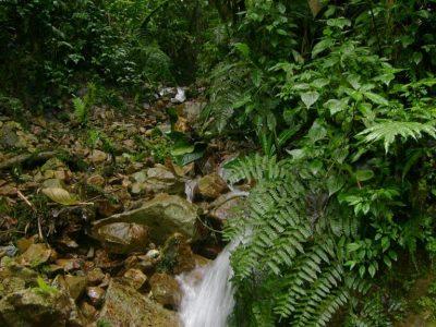 Vive El Turismo Ambiental.