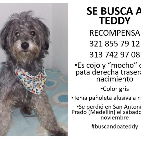 """""""Teddy"""" Se extravió en San Antonio de Prado"""