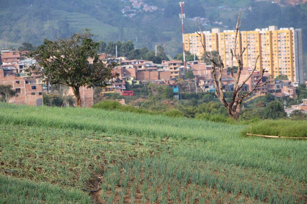se acaba el verde campo imagen comparativa campo y ciudad san antonio de prado
