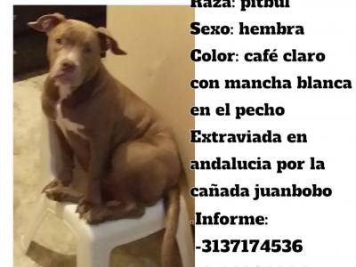 Se Extravió Perra En El Barrio Andalucía La Francia