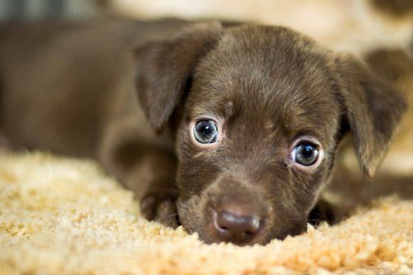Hasta El 15 De Septiembre Vá Jornada De Adopción Animal En Medellín