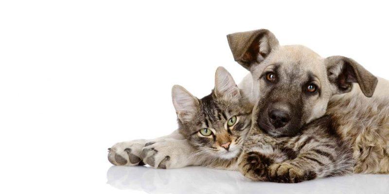 ¡Pilas! Quienes Tengan Mascotas, Habrá Jornada De Vacunación Contra La Rabia En Toda Antioquia