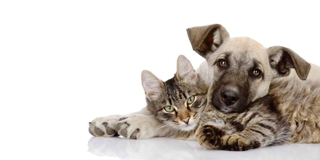 Adopcion Perros y gatos Medellin