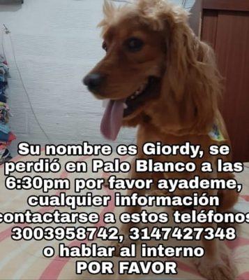 Giordy Se Perdio En San Antonio De Prado
