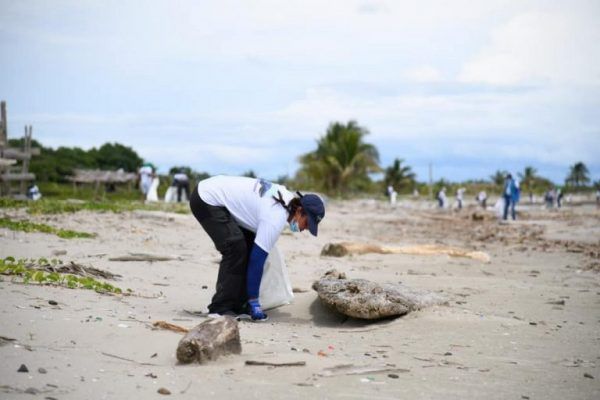 Tortugas Llegan A Desovar A Las Playas De Necoclí.