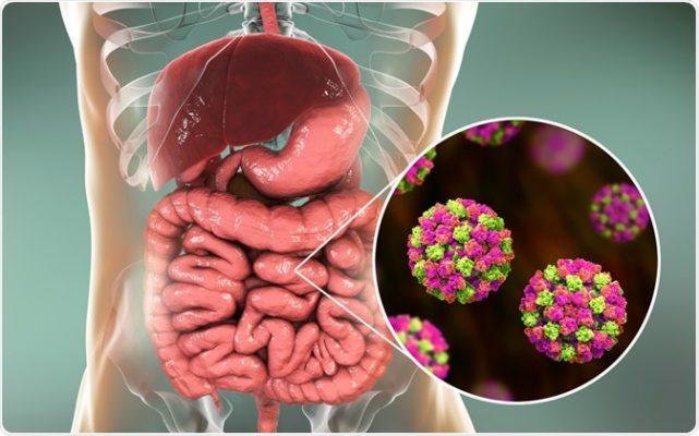 Norovirus , El  Virus Que ¡prende Las Alarmas Mundiales!