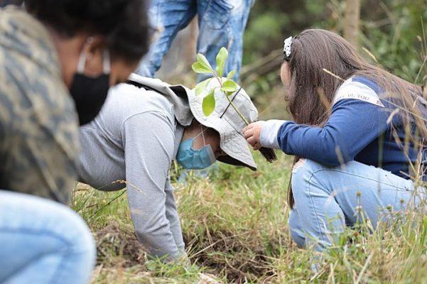 Medellín Se Reverdece Con La Siembra De 2.500 árboles.