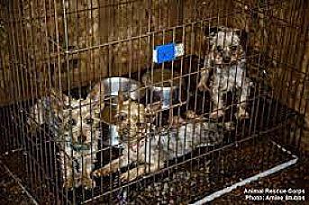 Veterinario Tendría En Mal Estado A 44 Perritos.
