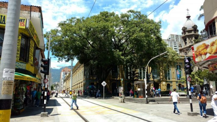 Árboles Y Palmas Declarados Patrimonio Natural Y Cultural De La Ciudad De Medellín.
