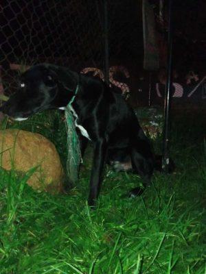 En Redes Sociales, La Comunidad Denuncia Un Presunto Abandono De Un Perrito En El Corregimiento De San Antonio De Prado