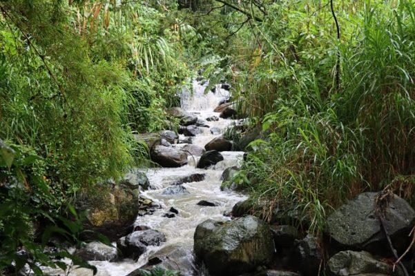 Actualización De La Información En La Red Hidrográfica De Medellín