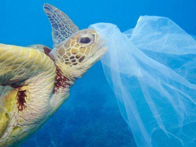 Las Tortugas Marinas, Una De Las Tantas Especies Afectadas Por Las Grandes Cantidades De Plástico En El Mar